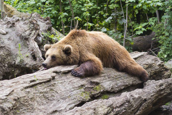 bear-1383980_1920